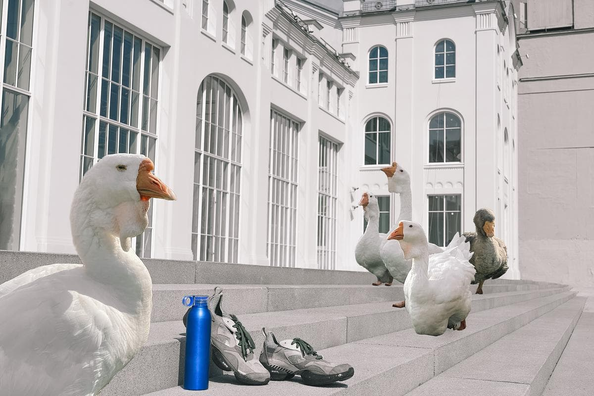 Grey Goose Run